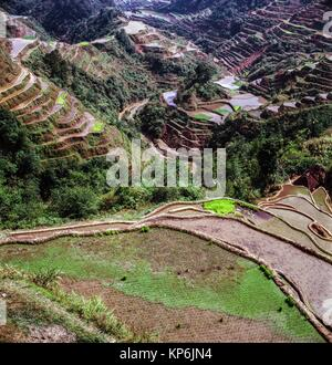 Banaue Rice Terraces, Ifugao Province, northern Luzon, Philippines. - Stock Photo