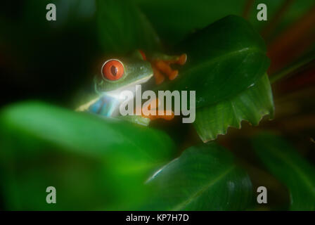 Green frog on the tree - Stock Photo