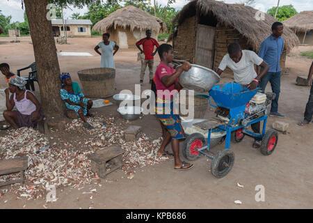 Grinding the peeled and washed Cassava roots, village near Mafi-Kumase Proper, Volta Region, Ghana, Africa - Stock Photo
