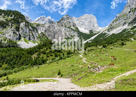 Idyllic landscape in the Alps with cows grazing on fresh green alpine pastures with high mountains. Austria, Tirol, - Stock Photo
