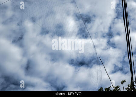 Net tensioned to catch Seychelles fruit bat, Seychelles flying fox (Pteropus seychellensis) for eating - Stock Photo