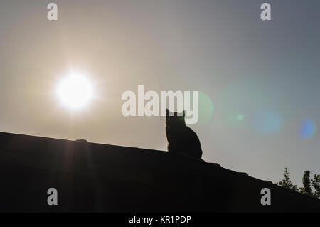 Black shadow of a cat on the roof at sunset, faded picture - Stock Photo