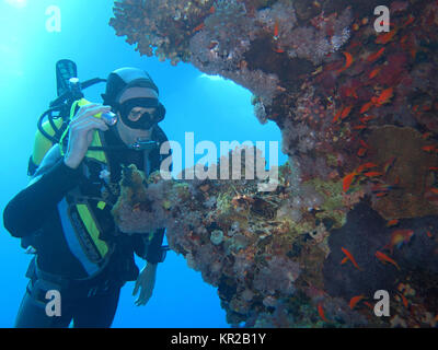 Diver, coral reef, Saint Johns reef, the Red Sea, Egypt, Taucher, Korallenriff, St. Johns Riff, Rotes Meer, Aegypten - Stock Photo