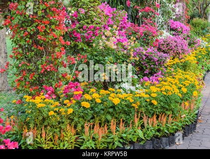 Colorful decorated flower garden - Stock Photo