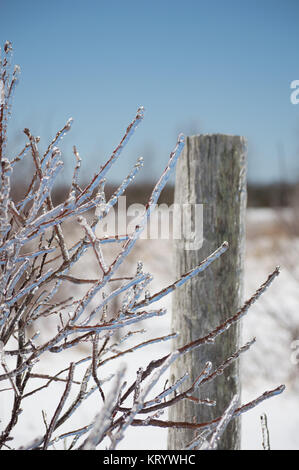 Dogwood twigs after icestorm - Stock Photo