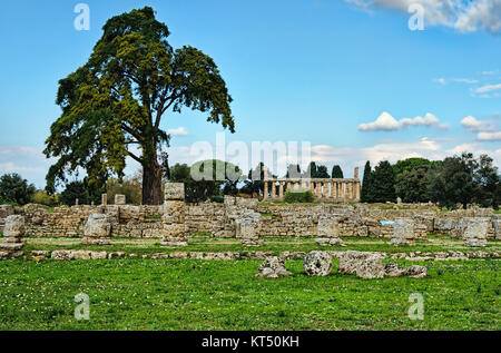 Trees under clear blue skies in an ancient city ruins - Stock Photo