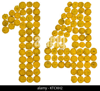 Arabic numeral 14, fourteen, from yellow flowers of tansy, isolated on white background The tansy - a plant of the - Stock Photo