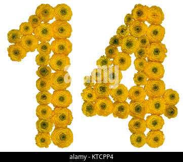 Arabic numeral 14, fourteen,  from yellow flowers of buttercup, isolated on white background - Stock Photo