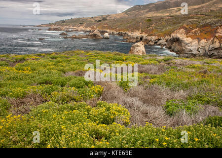 Carmel city beach and flower covered dunes in spring, California, USA - Stock Photo