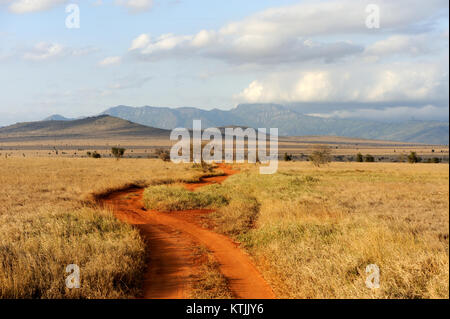 Savannah landscape in the National park in Kenya, Africa - Stock Photo