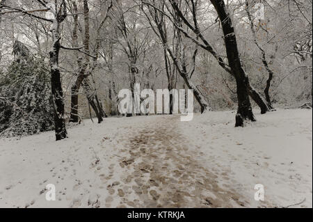 Highgate wood in the snow on December 10 2017 - Stock Photo