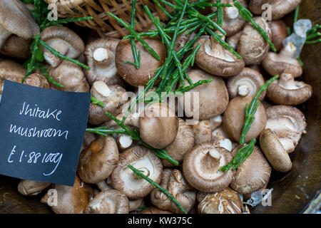 close up of different types of forest mushrooms - Stock Photo
