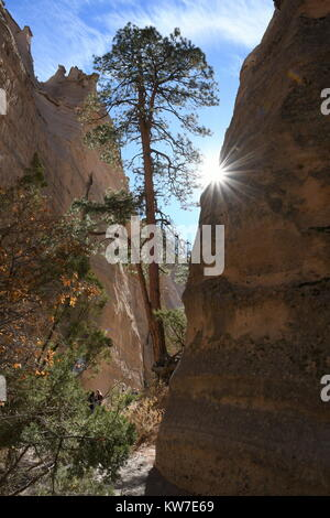 A lone tree grows between the canyon walls in Tent Rocks National Monument - Stock Photo