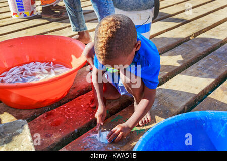 Small local boy descaling a freshly caught fish on the pier at Santa Maria, Sal Island, Salina, Cape Verde, Africa - Stock Photo