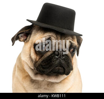 Close-up of a Pug puppy wearing a top hat, 6 months old, isolated on white - Stock Photo