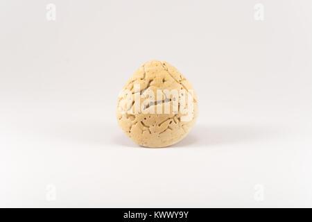 Seashell (white background) - Stock Photo