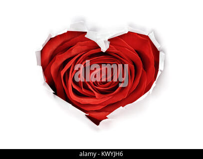 White torn paper in heart shape symbol with valentines day red rose background - Stock Photo