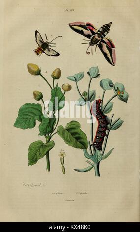 Dictionnaire pittoresque d'histoire naturelle et des phénomènes de la nature (6167543806) - Stock Photo