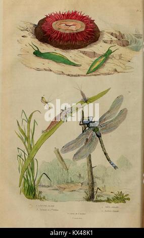 Dictionnaire pittoresque d'histoire naturelle et des phénomènes de la nature (6194571617) - Stock Photo