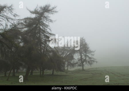 Welsh forests in the fog - Stock Photo