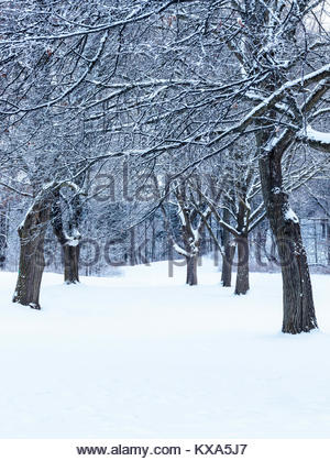 Snow covered trees after winter snowfall in Colonel Danforth Park in Toronto Ontario Canada - Stock Photo
