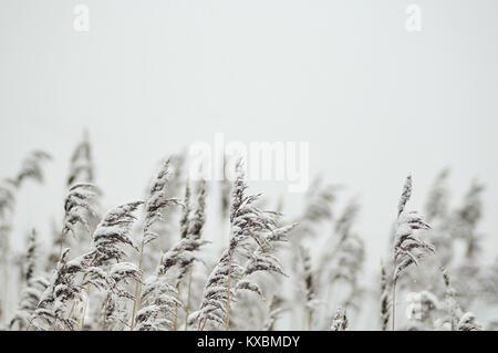 a winter day in Hamburg - Stock Photo