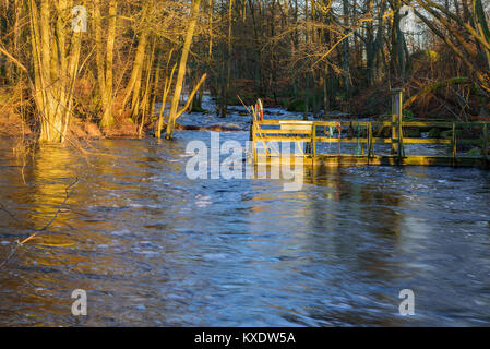 Wooden pier with ropes and tools on a flooded small river in forest landscape. The morning sun hits the pier and - Stock Photo