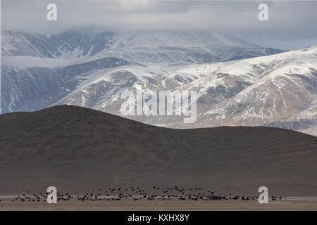 Mongolian landscape snowy mountains snow winter cloudy goat herd Mongolia - Stock Photo