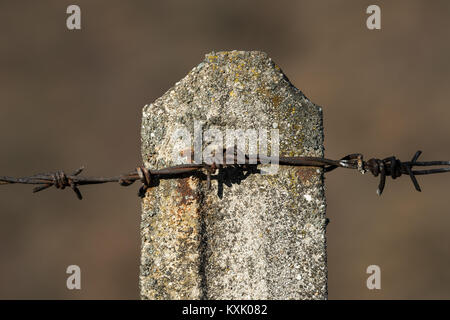 Closeup of an old rusty barbed wire on a concrete post - Stock Photo