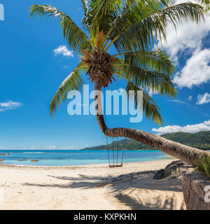 Palm tree on tropical beach in Seychelles, Mahe island. - Stock Photo