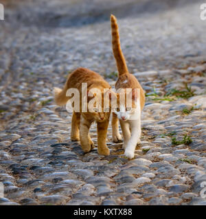 Two cute companioned cat kittens team up and walking side by side the same stony cobblestone path, Rhodes, Greece. - Stock Photo