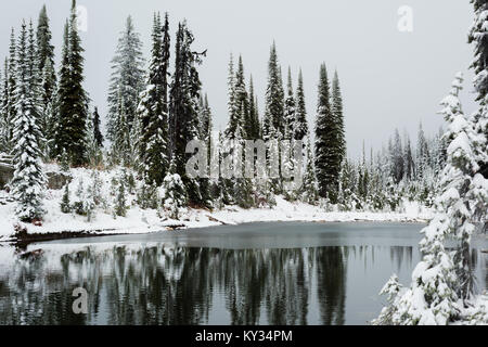 Snow covered pine trees and standing water - Stock Photo