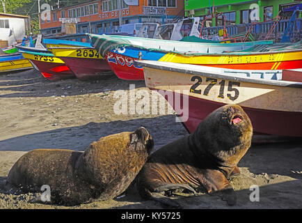 Sea lions and fishing boats on beach in San Antonio, Chile. - Stock Photo