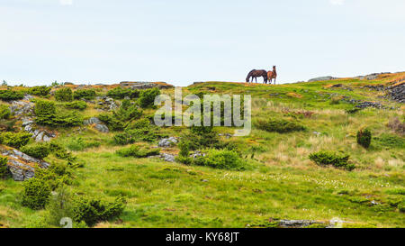 Horse in meadow field. Tranquil countryside scene. - Stock Photo