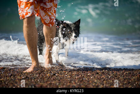 The Man Goes with his Dog (Black and White Border Collie) out of the Sea after Swiming. Summer Holidays on Beach - Stock Photo
