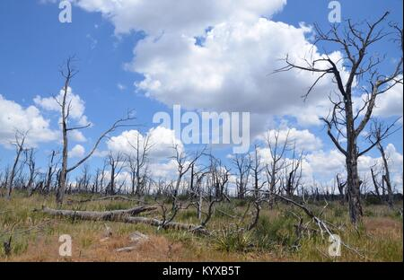 evidence of destructive fires at Mesa Verde National Park colorado USA - Stock Photo