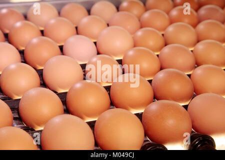 raw chicken eggs on a conveyor belt - Stock Photo