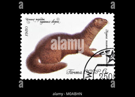 Cancelled postage stamp printed by Soviet Union, that shows European mink, circa 1980. - Stock Photo