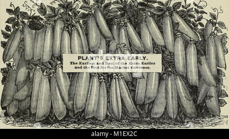 1900 catalogue of Plant Seed Company - reliable vegetable, farm, and flower seeds (1900) (20371669220) - Stock Photo