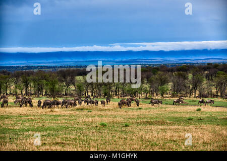 cloud formations at Great Rift Valley, landscape in Serengeti National Park with blue wilderbeests, UNESCO world - Stock Photo