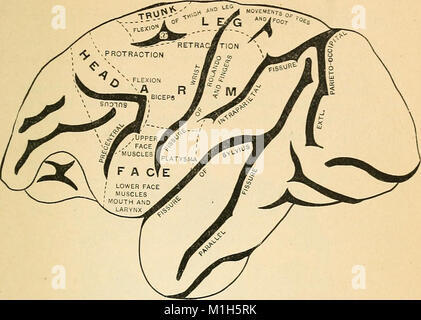 A text-book of comparative physiology for students and practitioners of comparative (veterinary) medicine (1890) - Stock Photo