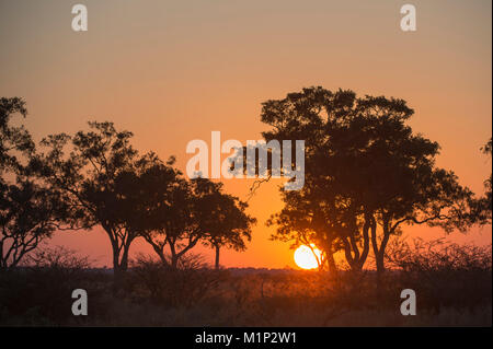 Sunset in the Savuti marsh, Botswana, Africa - Stock Photo