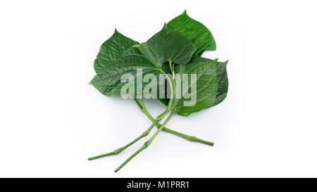 Betel Leaf in white background - Stock Photo