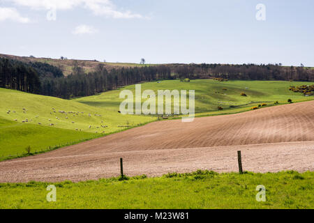 Fields of crops and sheep pastures sit on the rolling landscape of the Dorset Downs hills at Black Down near Dorchester. - Stock Photo