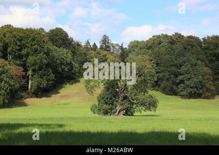 Parkland with tree and forest, Bad Muskau, Landkreis Görlitz, Saxony, Germany, Parklandschaft mit Baum und Wald, - Stock Photo