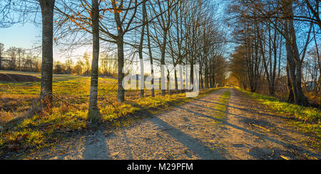 Fantastic sunset view of a forest pathway in Galicia, Spain. - Stock Photo