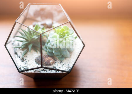 Mini succulent garden in glass terrarium on wooden windowsill. Succulents with sand and rocks in glass box. Home - Stock Photo