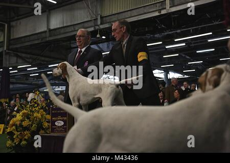 The 2018 Westminster Kennel Club Dog Show held annually in New York City, NY. 13th Feb, 2018. Credit: Credit: /ZUMA - Stock Photo