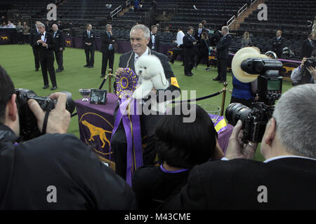 New York, NY, USA. 13th Feb, 2018. (L-R) Dog Handler Bill McFadden and Flynn, the Bichon Frise wins Best in Show - Stock Photo