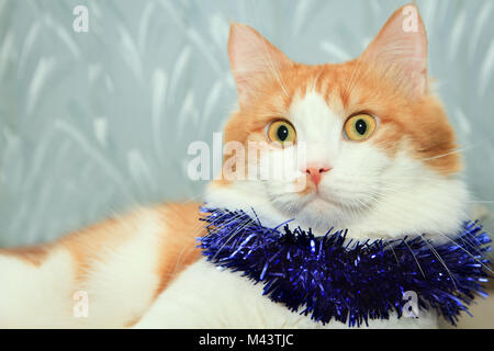 Funny red and white cat with christmas tinsel decoration - Stock Photo